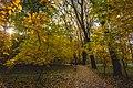 Жовте листя в парку. 2017р.jpg