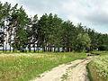 Лісосмуга Н.Гребля.JPG