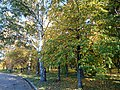 "Мозаика листвы (парк ""Швейцария"").jpg"