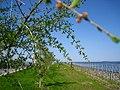 Набережная у устья реки Красненькой.jpg