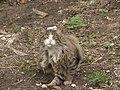Россия, Нижегородская область, Балахна, кошка, 13-10 09.05.2006 - panoramio.jpg