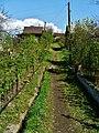 Сад Строитель - panoramio (8).jpg
