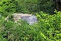 Сирецький дендрологічний парк 43.JPG