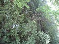 Устимівський дендрологічний парк займає майже 9 гектарів землі.JPG