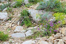 Участок каменистой степи.jpg