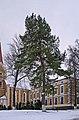 Чортків, Монастирські сосни P1190321.jpg