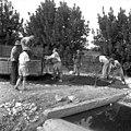 בית-זרע 1939 - בניית כביש הכניסה עובדים לא מזוהים - iוינטרשטייןi btm11422.jpeg