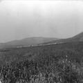 ימה (יבנאל) (בתוך אלבום של ריכרד ליכטהיים מסע לארץ ישראל 1910)-PHAL-1619914.png