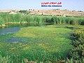 المحمية الطبيعية البحيرة الشاطئية سيدي موسى - منظر 993.jpg