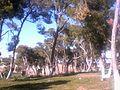 غابة كروس بولاية46.jpg
