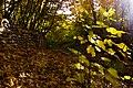 پاییزدر ایران-قاهان قم-Autumn in iran-qom 14.jpg