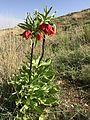 گلستانکوه 3.jpg