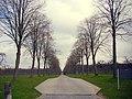 モダーヴの並木道 - panoramio.jpg