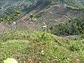 台中市東勢區慶福里沿著軟埤坑、燥坑分水嶺向東看 - panoramio.jpg
