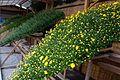 後樂園菊花展 Korakuen Chrysanthemum Exhibition - panoramio.jpg