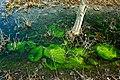有着大量绿色藻类的水洼——2012-4-03 - panoramio.jpg