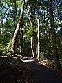 格氏栲林 - Castanopsis kawakamii Forest - 2016.08 - panoramio.jpg