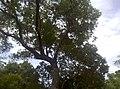 植物園中的植物及樹木花草(包括歷史遺跡)-48.jpg