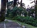 檜谷 Juniper Valley - panoramio (1).jpg