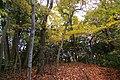阿寺城 三ノ曲輪 - panoramio (1).jpg