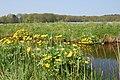 - panoramio - ✿ Vlinder ✿ (4).jpg