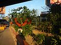 01223jfCircumferential Road 6 Bagong Ilog Pasig Boulevard Flyover Vargas Centennial Bridgefvf.jpg