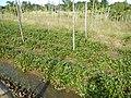 0581jfLandscapes Roads Vegetables Fields Binagbag Angat Bulacanfvf 10.JPG