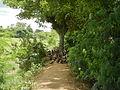 06659jfCandaba Pampanga Fields Duck Farming Bahay Pare Dulong Ilog Bulacanfvf 24.JPG
