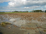 09461jfRoads Paddy fields Domesticated ducks Paligui Candaba Pampangafvf 20.JPG