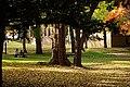 131103 Hokkaido University Sapporo Hokkaido Japan02s3.jpg