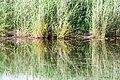 170719-02 Vegetation im Spiegel des Wassers.jpg