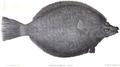 1839 BostonJournal NaturalHistory v2 illus1.png