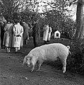 1958 visite d'une délégation INRA au Haras du Pin Cliché Jean Joseph Weber-25.jpg