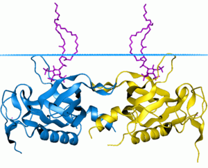 Pleckstrin homology domain - PH domain of tyrosine-protein kinase BTK