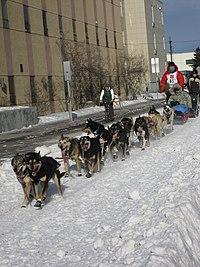 2008 Iditarod Anchorage (2311649601).jpg