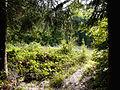200910071141MEZ Limeswanderweg Wp 10-12 - Wp 10-13 3.jpg