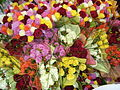 2009 02 07 Blumen auf der Fruit Logistica.JPG