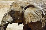 2012-06-09 Oakland Zoo 056 (7439971318).jpg