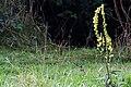 20130921 108 Kessel Weerdbeemden Bloem (9861608924).jpg