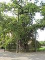 2014-09-07 14.35.18-Gros chêne de Liernu.jpg