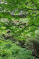 2014 07 Selva di Progno (VR) Italy - Giazza - Val Fraselle - forest - Ctg Baldo Lessinia org photo Paolo Villa FOTO6793.JPG