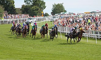 2014 Epsom Derby - The 2014 Derby field rounds Tattenham Corner.
