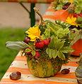 2015-10-17 11-16-25 marche-plantes-belfort.jpg