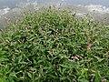 2015.09.05 12.26.43 DSC00301 - Flickr - andrey zharkikh crop.jpg