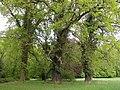 20150508750DR Ahlsdorf (Schönewalde) Schloßpark.jpg