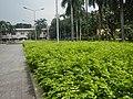 22Mehan Garden Ermita Manila Alexander Pushkin 19.jpg