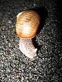2773 - Innsbruck - Snail.JPG