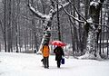 8763m Park w Pszczynie . Foto Barbara Maliszewska.jpg