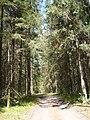 9 Брянский лес Номинация Природа Котова Мариша.jpg
