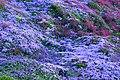 Açores 2010-07-22 (5131184114).jpg
